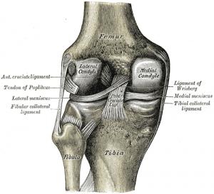Knee bone diagram
