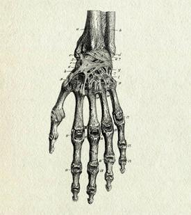 black and white sketch of skeletal structure of a hand