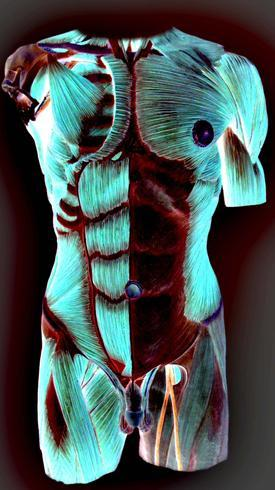 male muscles exposed in artistic color