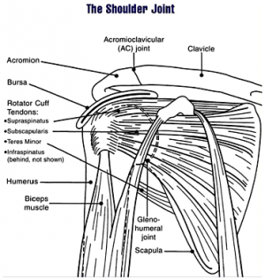 Diagram of shoulder joint